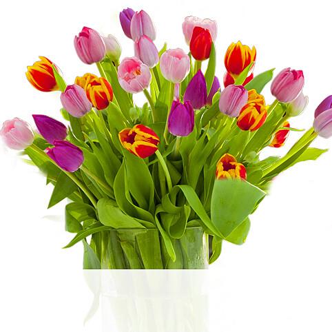 Tulpen im Bund
