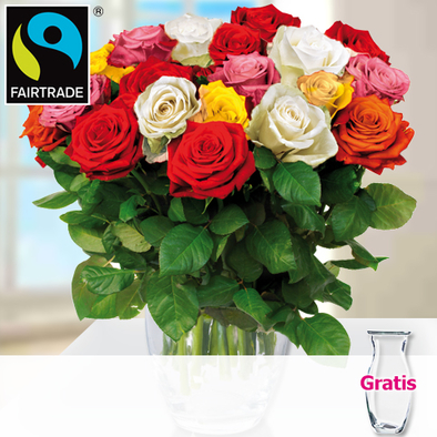 Bunte FAIRTRADE Rosen im Bund mit Vase