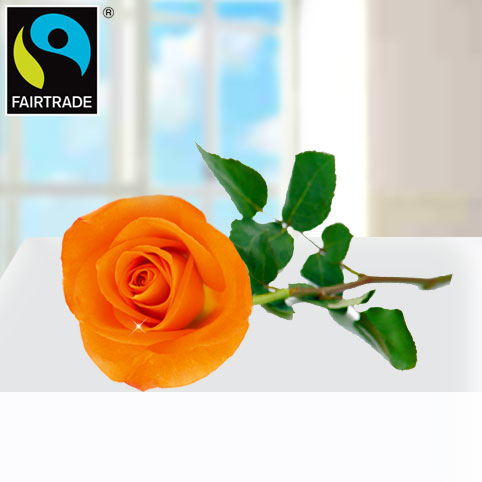 Orange FAIRTRADE Einzelrose
