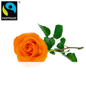 Orange FAITRADE <br>Einzelrose