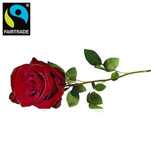 Rote langstielige <br>Rose