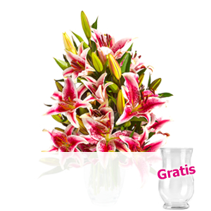 10 rosa-weiße Lilien <br>im Bund