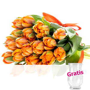 20 orange Tulpen <br>im Bund